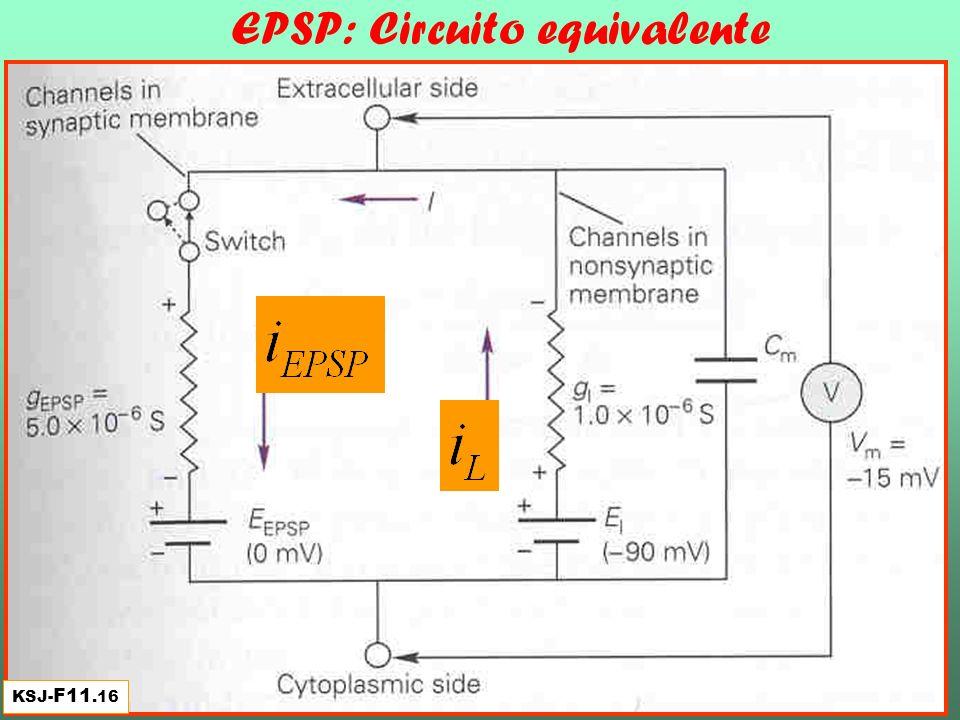 EPSP: Circuito equivalente KSJ- F11.16
