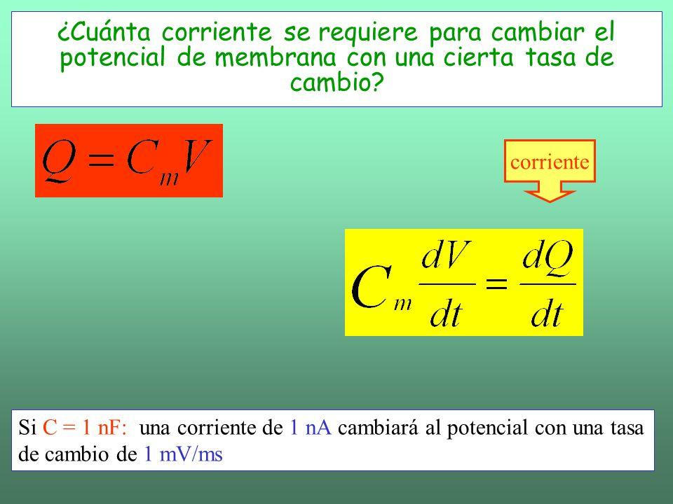 La evolución para V Ecuación del potencial de membrana: no contiene la generación de la espiga!