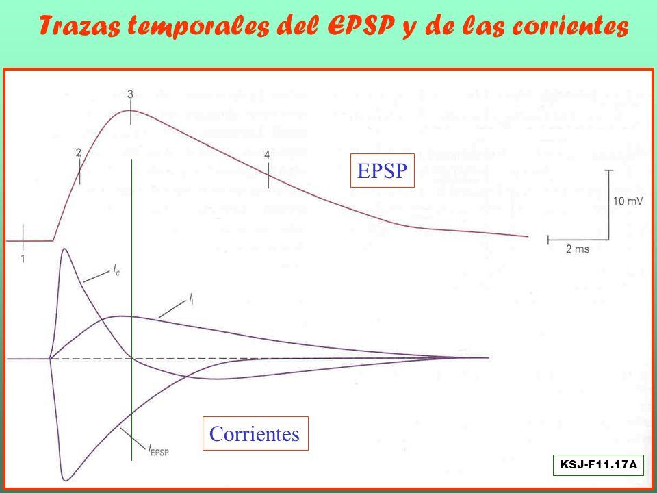 Estado inicial del circuito y Apertura del canal sináptico KSJ-F11.17B
