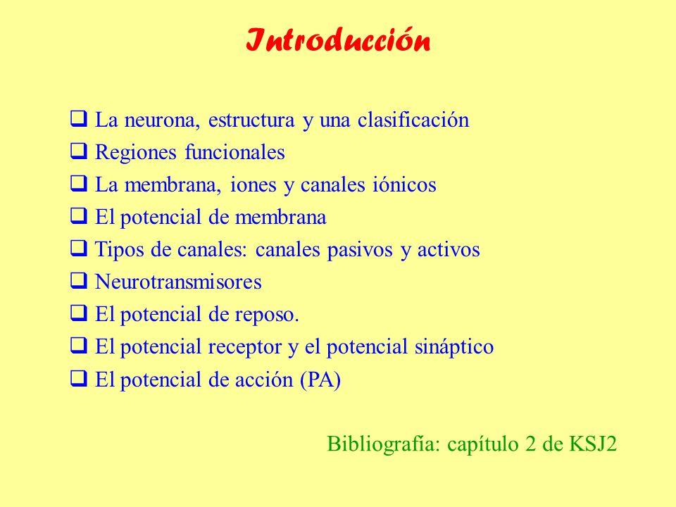 Introducción La neurona, estructura y una clasificación Regiones funcionales La membrana, iones y canales iónicos El potencial de membrana Tipos de ca