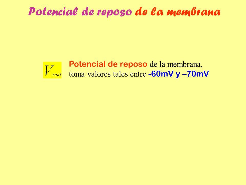 Potencial de reposo de la membrana Potencial de reposo de la membrana, toma valores tales entre -60mV y –70mV