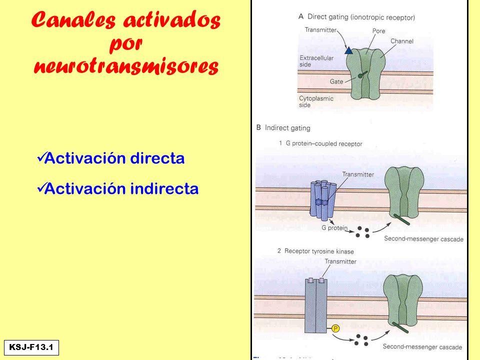 Canales activados por neurotransmisores Activación directa Activación indirecta KSJ-F13.1