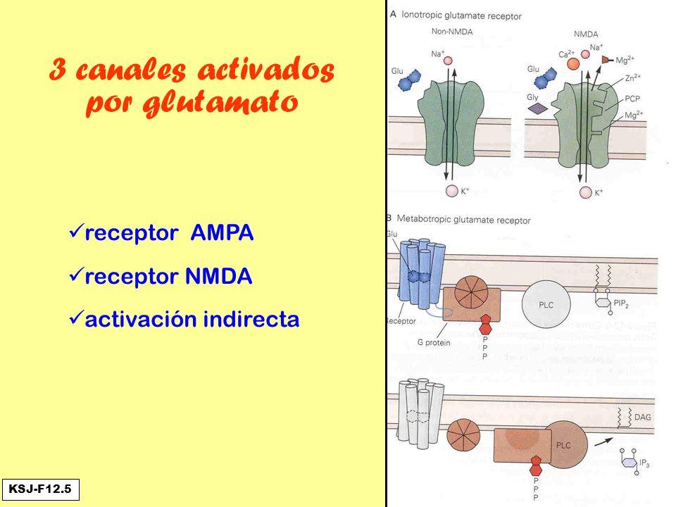3 canales activados por glutamato receptor AMPA receptor NMDA activación indirecta KSJ-F12.5