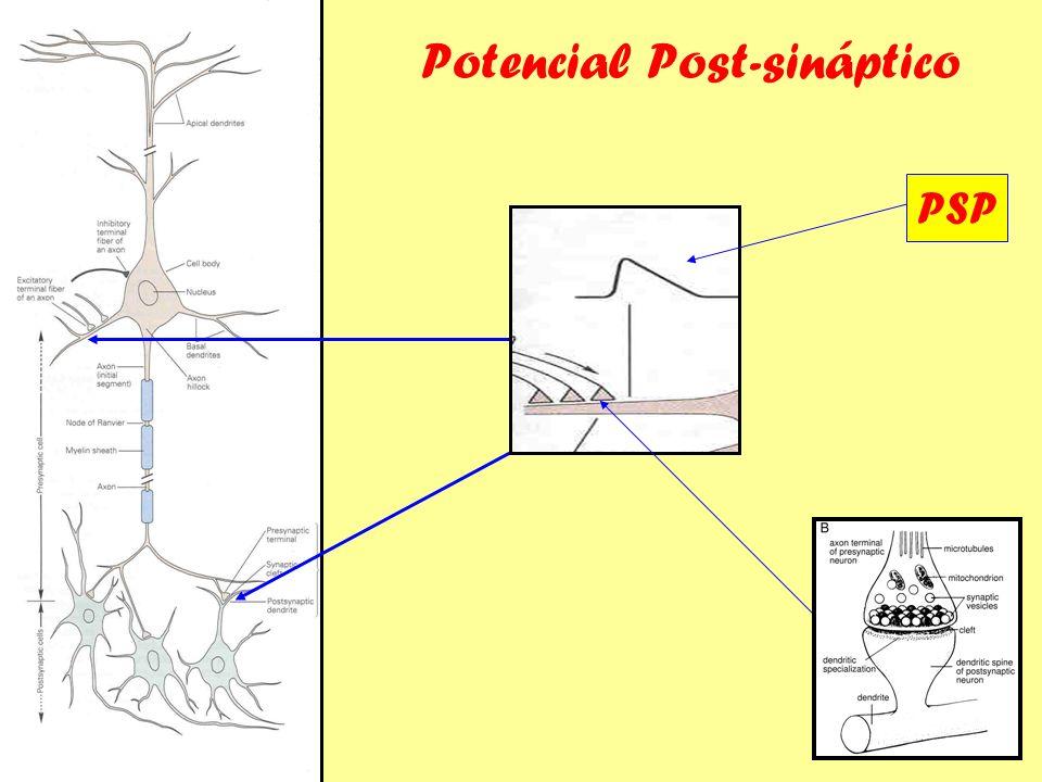 Potencial Post-sináptico PSP