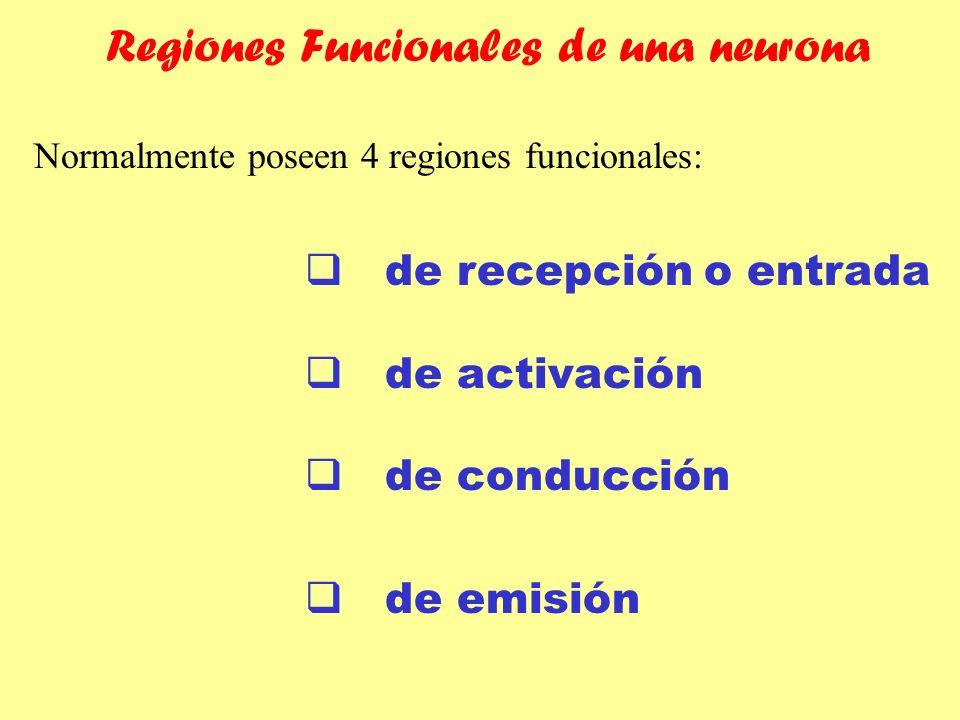 de recepción o entrada de activación de conducción de emisión Normalmente poseen 4 regiones funcionales: Regiones Funcionales de una neurona