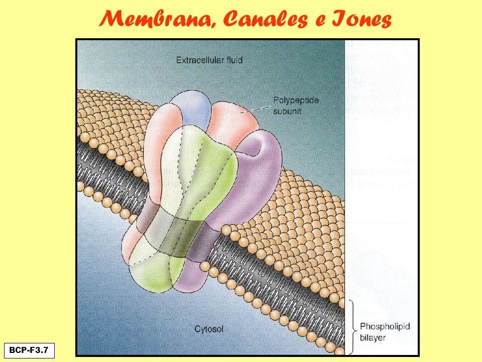 Membrana, Canales e Iones BCP-F3.7