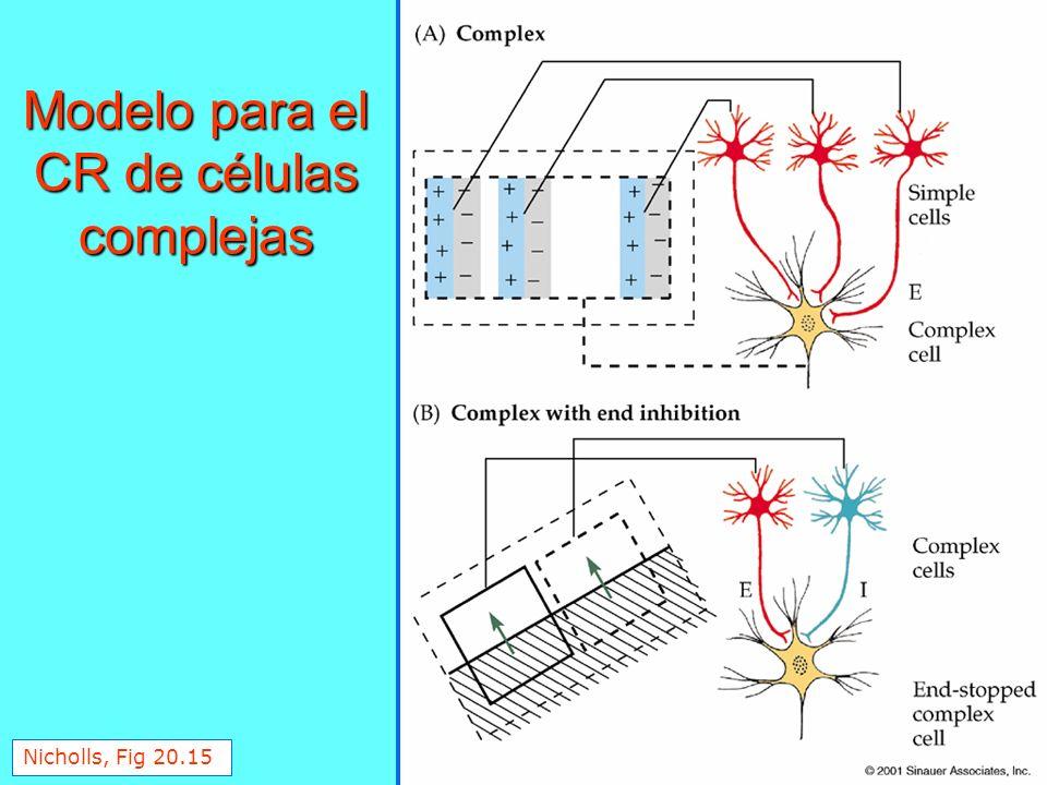 Nicholls, Fig 20.15 Modelo para el CR de células complejas