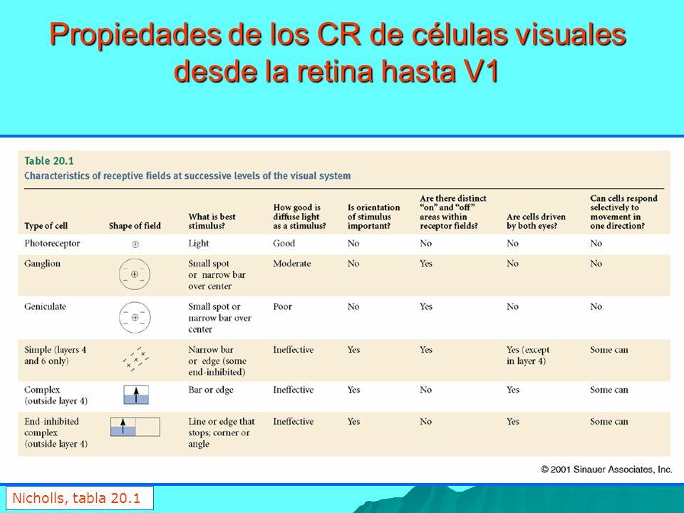 Nicholls, tabla 20.1 Propiedades de los CR de células visuales desde la retina hasta V1