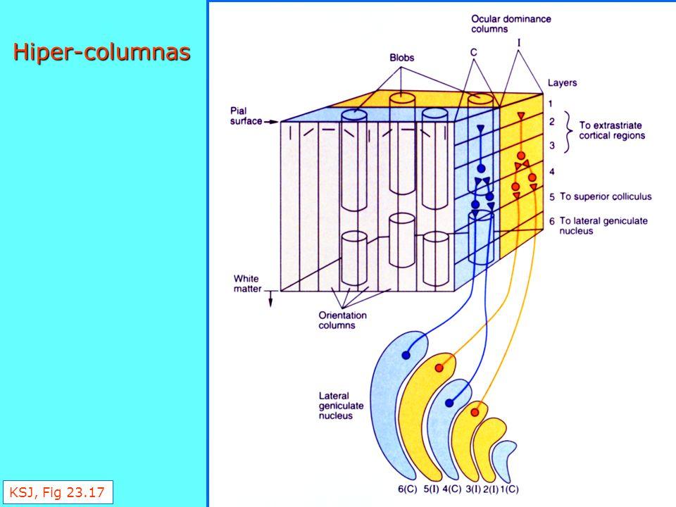 Figure 23-17 Hiper-columnas KSJ, Fig 23.17