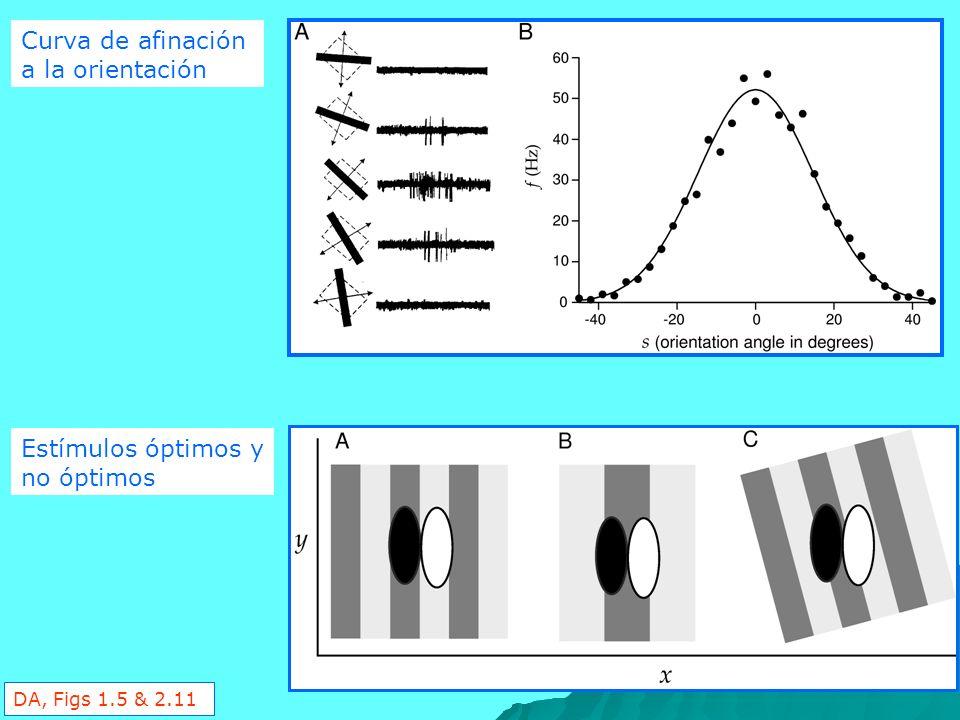 Curva de afinación a la orientación Estímulos óptimos y no óptimos DA, Figs 1.5 & 2.11