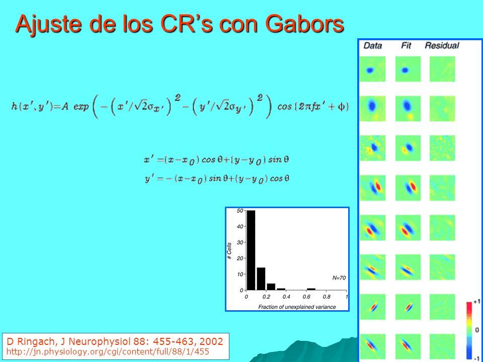Ajuste de los CRs con Gabors D Ringach, J Neurophysiol 88: 455-463, 2002 http://jn.physiology.org/cgi/content/full/88/1/455