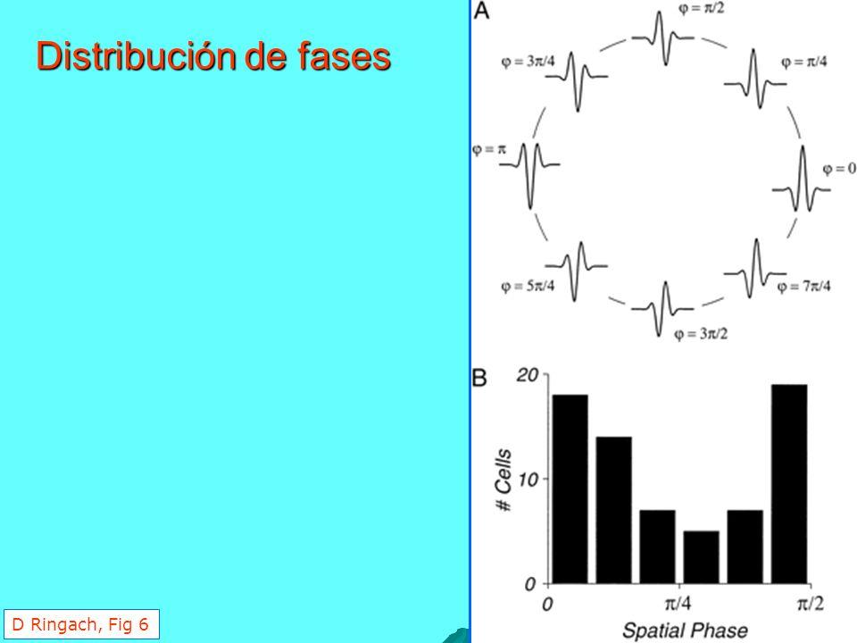 Distribución de fases D Ringach, Fig 6