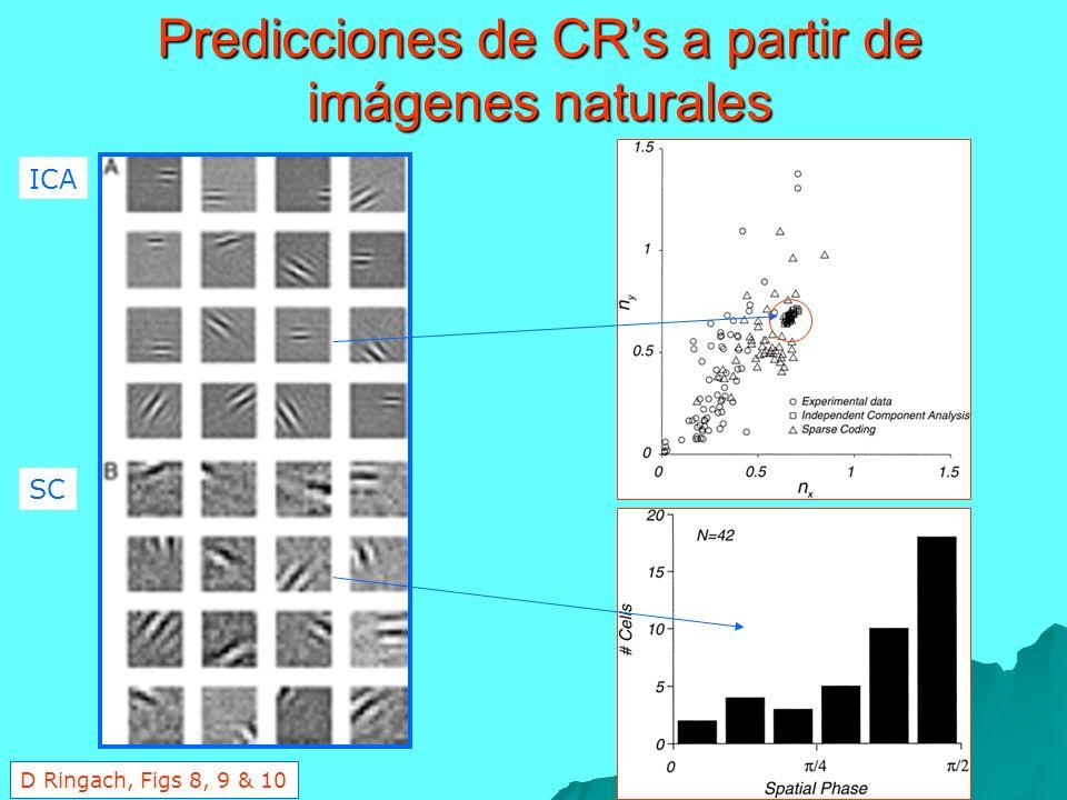 Predicciones de CRs a partir de imágenes naturales ICA SC D Ringach, Figs 8, 9 & 10