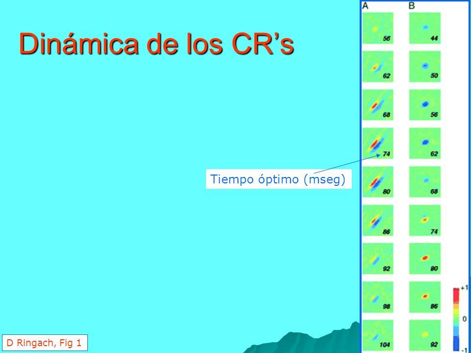 Dinámica de los CRs Tiempo óptimo (mseg) D Ringach, Fig 1