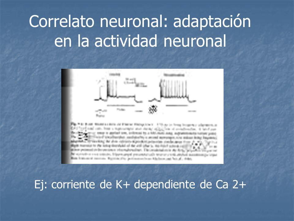 Correlato neuronal: adaptación en la actividad neuronal Ej: corriente de K+ dependiente de Ca 2+