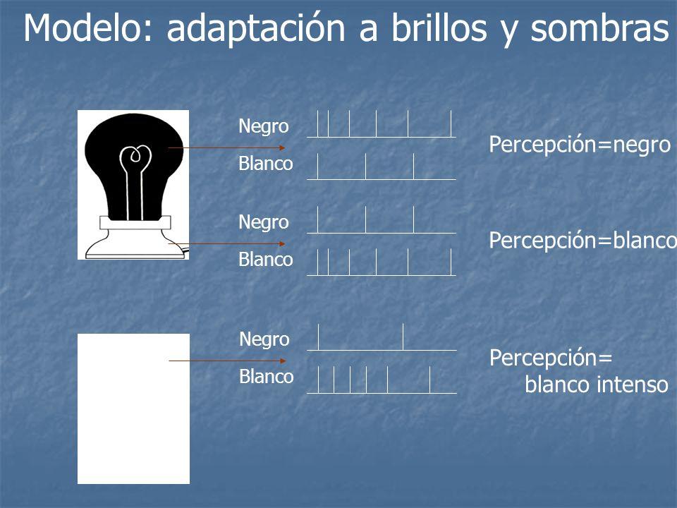 Modelo: adaptación a brillos y sombras Negro Blanco Percepción=negro Negro Blanco Percepción=blanco Negro Blanco Percepción= blanco intenso
