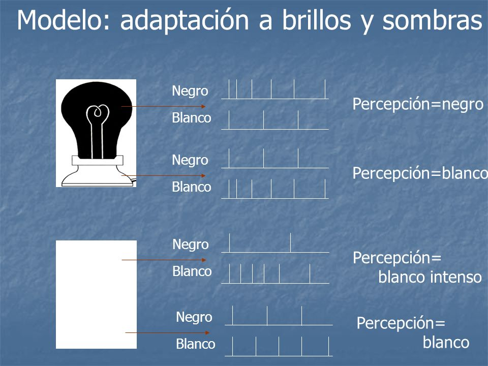 Modelo: adaptación a brillos y sombras Negro Blanco Percepción=negro Negro Blanco Percepción=blanco Negro Blanco Percepción= blanco Negro Blanco Perce