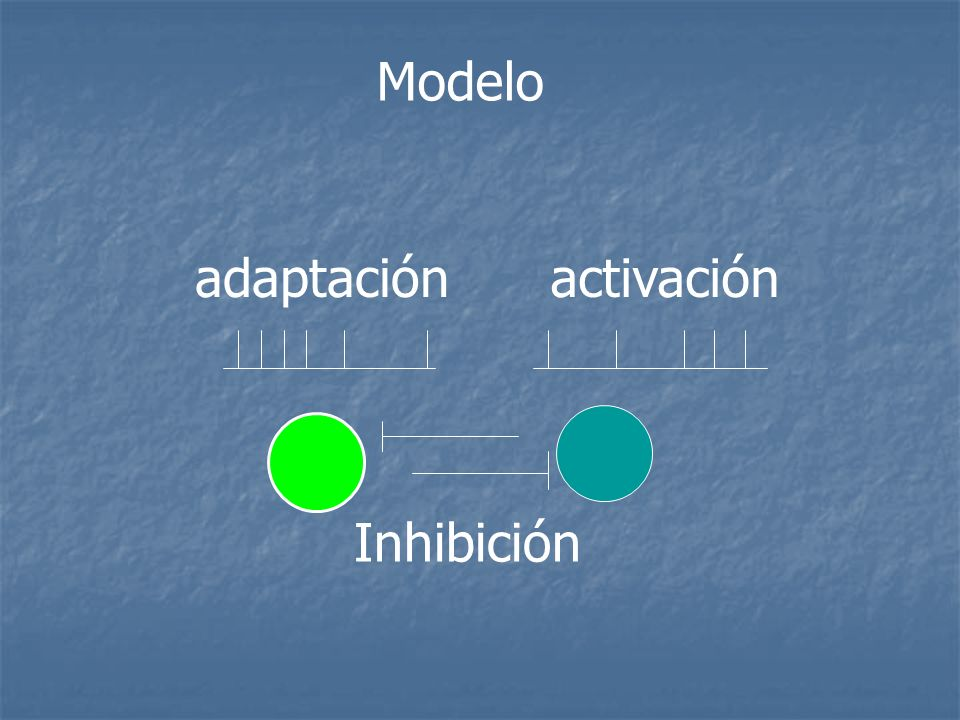 Modelo Inhibición adaptaciónactivación