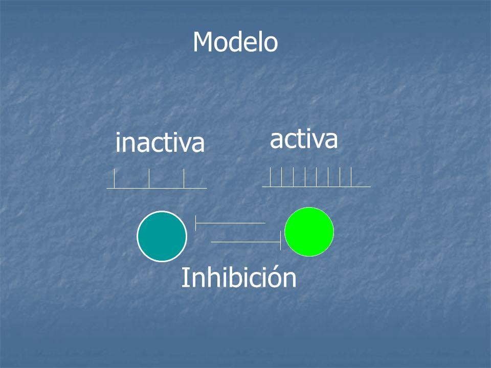 Modelo Inhibición activa inactiva