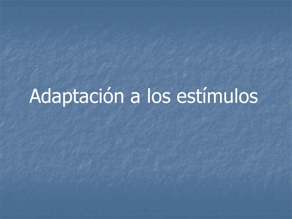 Adaptación a los estímulos