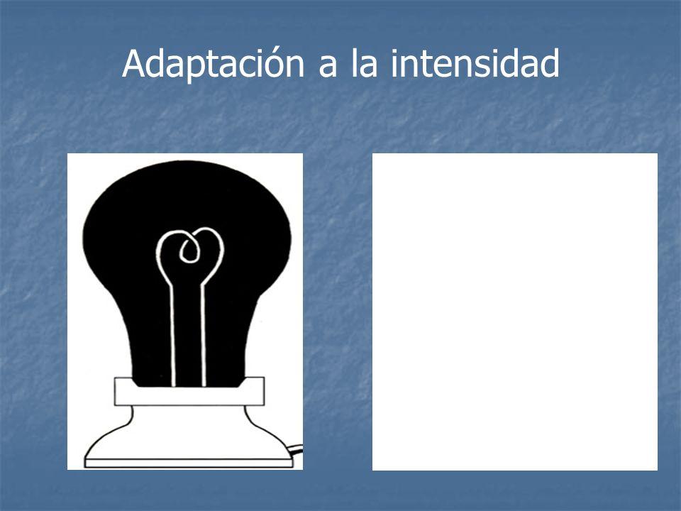 Adaptación a la intensidad