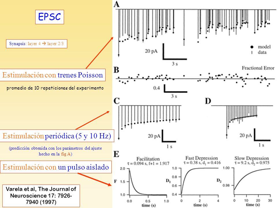 Varela et al, F3-EPSC EPSC Varela et al, The Journal of Neuroscience 17: 7926- 7940 (1997) Estimulación con trenes Poisson Estimulación periódica (5 y