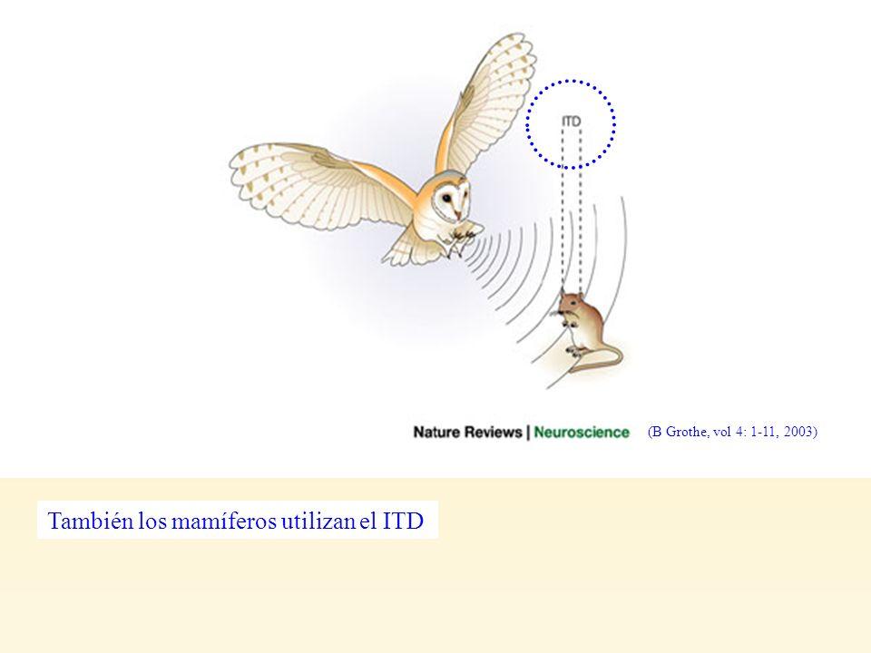 Grothe, F2 También los mamíferos utilizan el ITD (B Grothe, vol 4: 1-11, 2003)