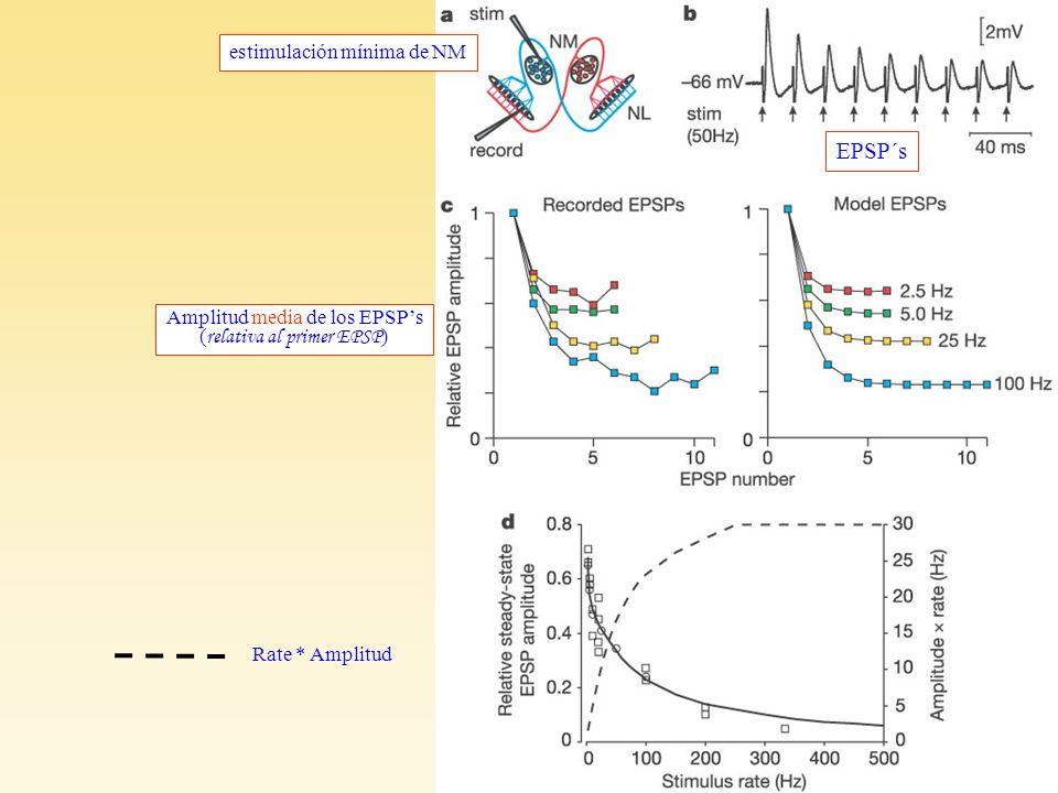 Cook et al F1 estimulación mínima de NM EPSP´s Amplitud media de los EPSPs ( relativa al primer EPSP ) Rate * Amplitud