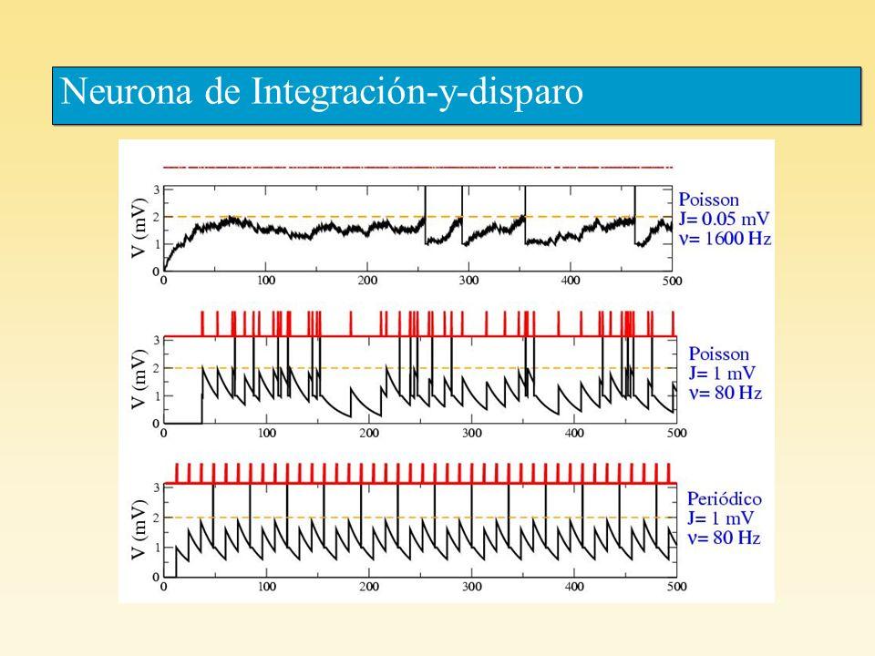 Varela et al, F3-EPSC EPSC Varela et al, The Journal of Neuroscience 17: 7926- 7940 (1997) Estimulación con trenes Poisson Estimulación periódica (5 y 10 Hz) (predicción obtenida con los parámetros del ajuste hecho en la fig A) Synapsis: layer 4 layer 2/3 Estimulación con un pulso aislado promedio de 10 repeticiones del experimento