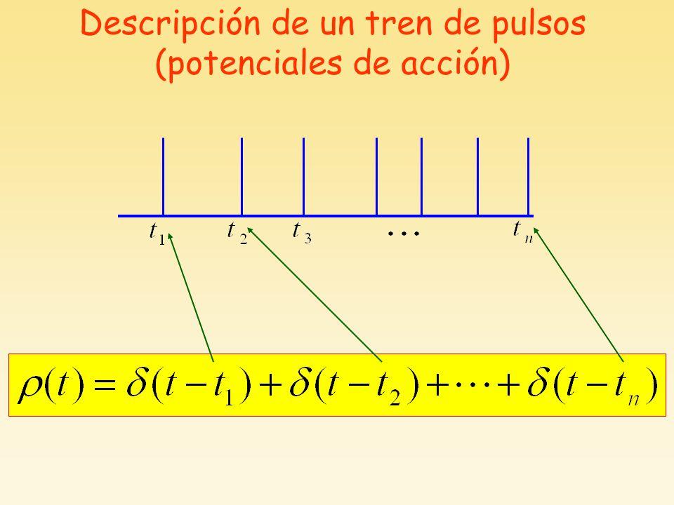Descripción de un tren de pulsos (potenciales de acción)