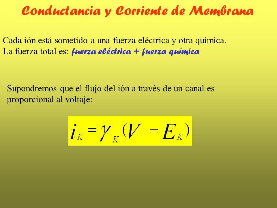 Cada ión está sometido a una fuerza eléctrica y otra química. La fuerza total es: fuerza eléctrica + fuerza química Conductancia y Corriente de Membra