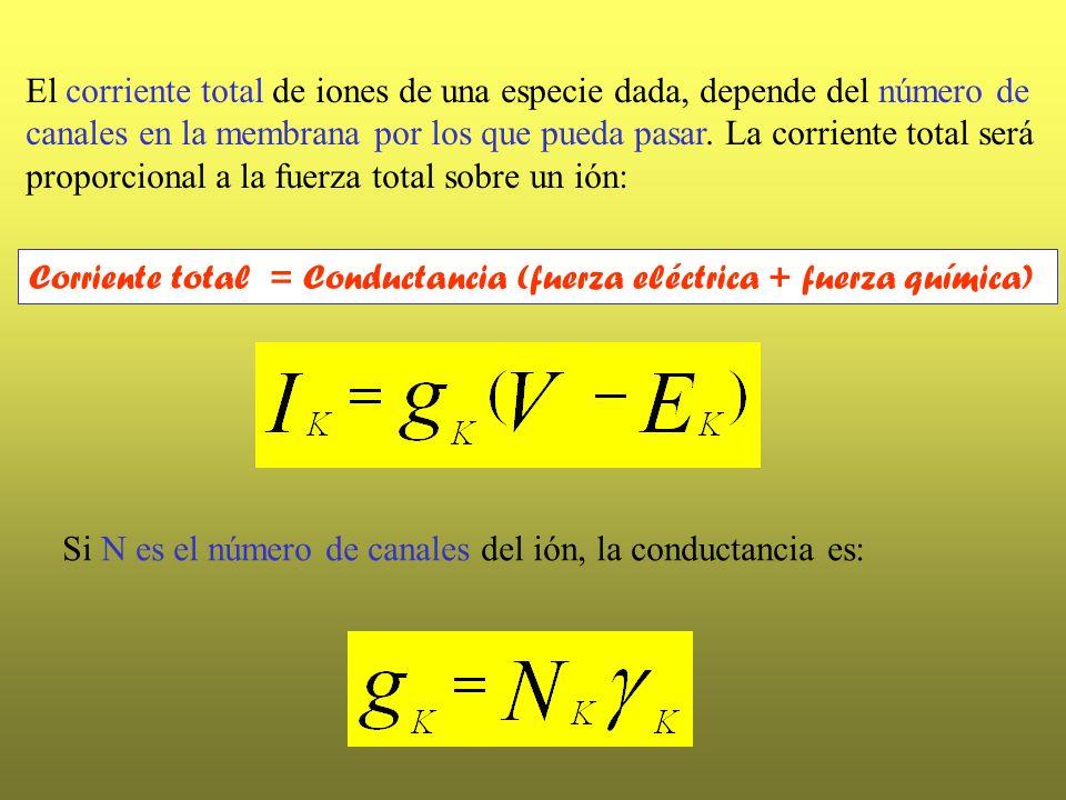 El corriente total de iones de una especie dada, depende del número de canales en la membrana por los que pueda pasar. La corriente total será proporc
