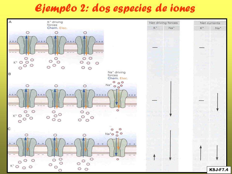 Ejemplo 2: dos especies de iones KSJ-F7.4