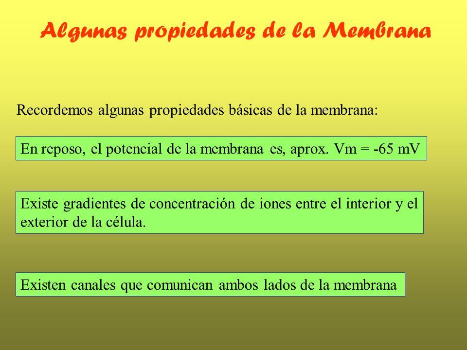 Algunas propiedades de la Membrana Recordemos algunas propiedades básicas de la membrana: Existe gradientes de concentración de iones entre el interio