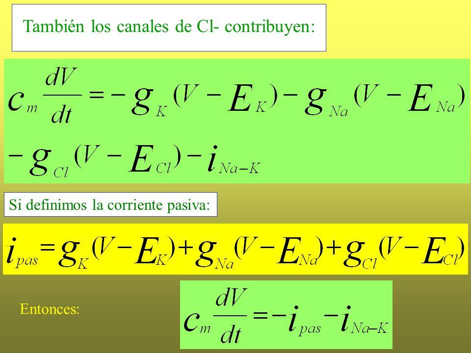 También los canales de Cl- contribuyen: Si definimos la corriente pasiva: Entonces: La corriente pasiva