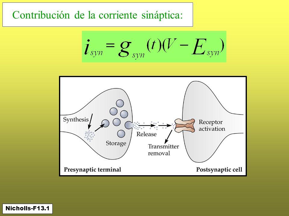 Contribución de la corriente sináptica: Nicholls-F13.1
