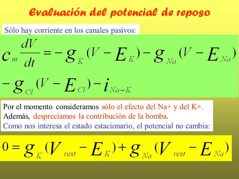 Evaluación del potencial de reposo Por el momento consideramos sólo el efecto del Na+ y del K+. Además, despreciamos la contribución de la bomba. Como