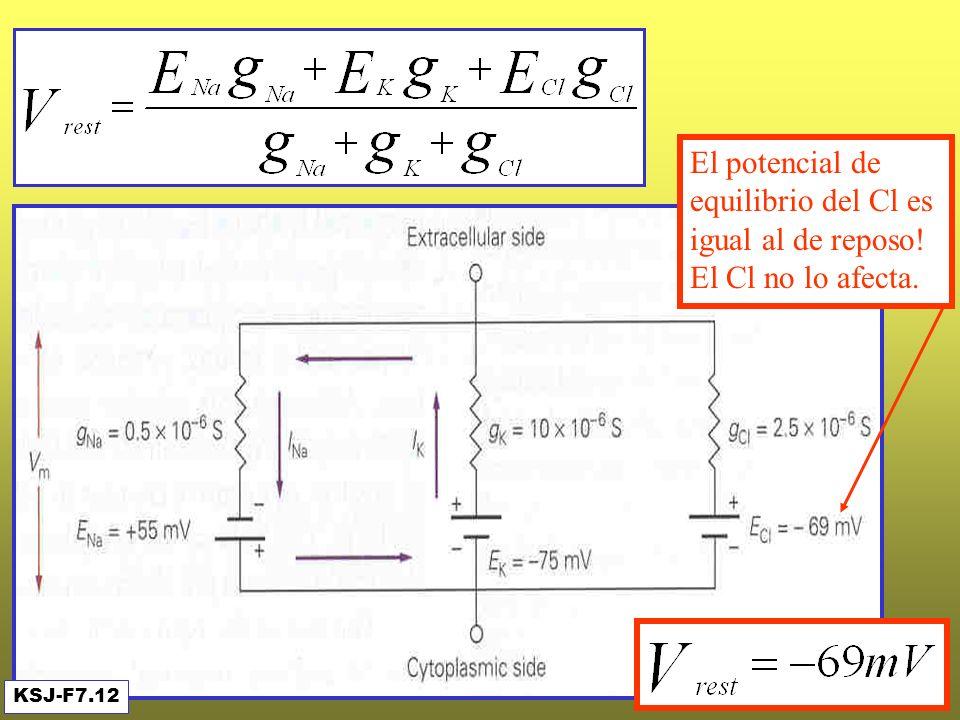 El Cl no afecta a Vrest KSJ-F7.12 El potencial de equilibrio del Cl es igual al de reposo! El Cl no lo afecta.