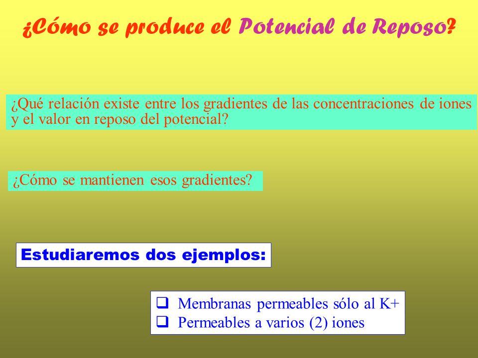 (Los parámetros y se determinan fenomenológicamente) Corriente de pérdida (leak current) La corriente de pérdida-leak Todos los efectos independientes del tiempo (e.g.