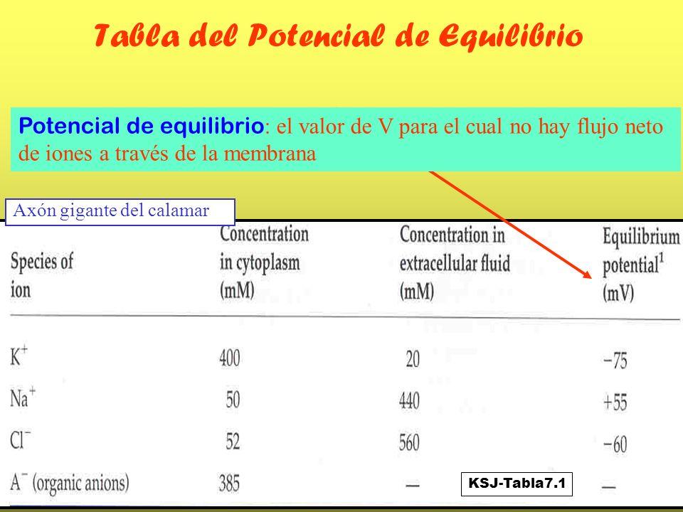 Tabla del Potencial de Equilibrio Potencial de equilibrio : el valor de V para el cual no hay flujo neto de iones a través de la membrana KSJ-Tabla7.1