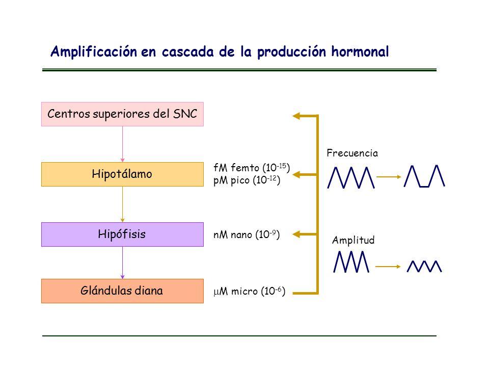 Centros superiores del SNC Hipotálamo Hipófisis Glándulas diana Centros superiores del SNC Hipotálamo Hipófisis Glándulas diana fM femto (10 -15 ) pM