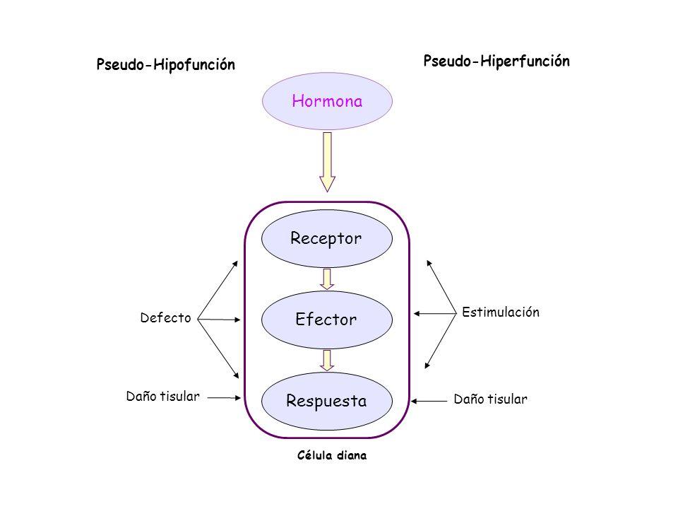 Hormona Receptor Efector Respuesta Defecto Célula diana Daño tisular Estimulación Daño tisular Pseudo-Hipofunción Pseudo-Hiperfunción