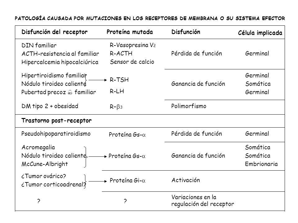 PATOLOGÍA CAUSADA POR MUTACIONES EN LOS RECEPTORES DE MEMBRANA O SU SISTEMA EFECTOR GerminalPérdida de función R-Vasopresina V 2 R-ACTH Sensor de calc