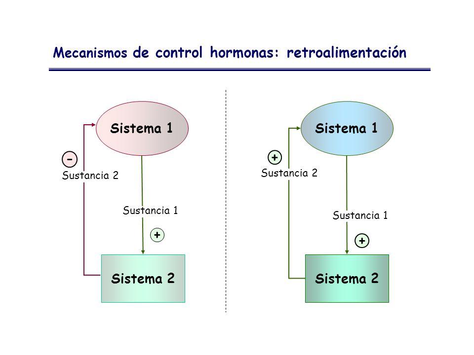 Mecanismos de control hormonas: retroalimentación Sistema 1 Sistema 2 + Sistema 1 Sistema 2 - Sustancia 1 Sustancia 2 + +