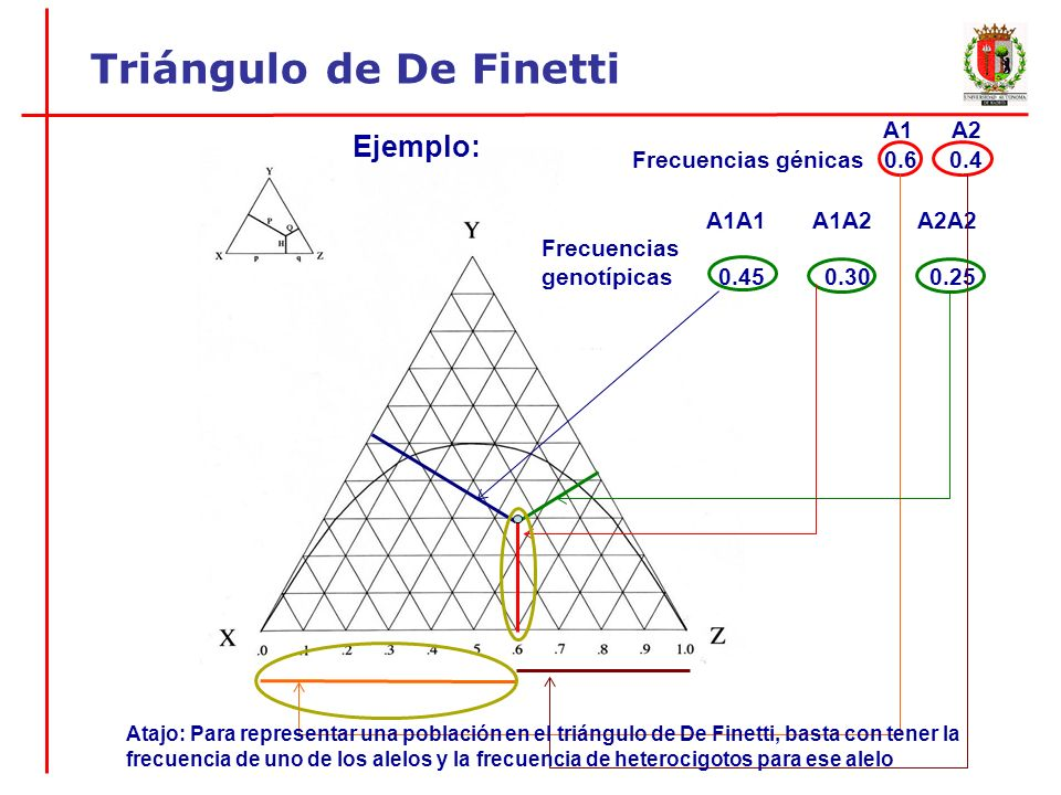 A1 A2 Frecuencias génicas 0.6 0.4 A1A1 A1A2 A2A2 Frecuencias genotípicas 0.45 0.30 0.25 Atajo: Para representar una población en el triángulo de De Fi