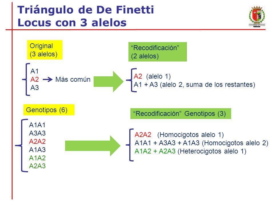 Locus A (3 ALELOS) A1A1 A2A2 A3A3 A1A2 A1A3 A2A3 TOTAL Individuos 4 10 1 11 2 2 30 Observados Frecuencias Génicas p(A1)=(4/30)+1/2[(2/30)+(11/30]= 0.35 q(A2)=(10/30)+1/2[(11/30)+(2/30]= 0.55 r(A3)= (1/30)+1/2[(2/30)+(2/30)]= 0.10 A2 = 0.55 A1+A3 = 0.45 Heterozigotos alelo A2 11(A1A2) + 2(A2A3) = 13 Frecuencia = 13/30 = 0.43 Recodificación (2 alelos)