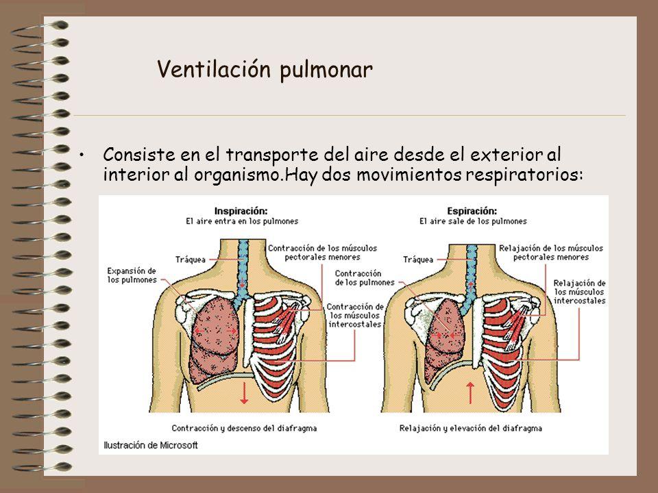 Ventilación pulmonar Consiste en el transporte del aire desde el exterior al interior al organismo.Hay dos movimientos respiratorios: