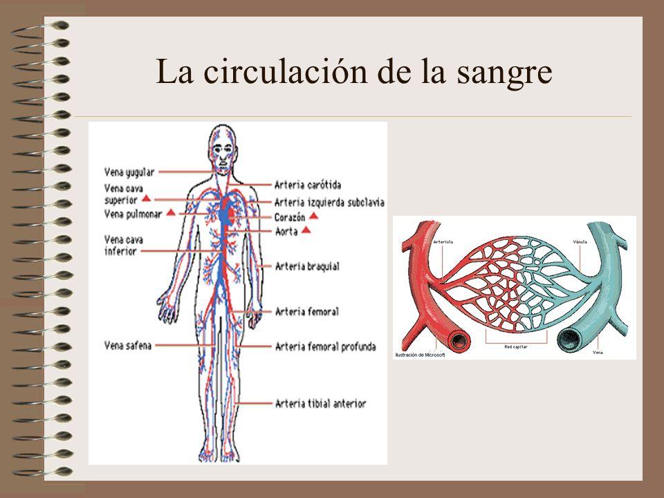 El aparato excretor Es el encargado de eliminar los desechos producidos en el metabolismo celular.