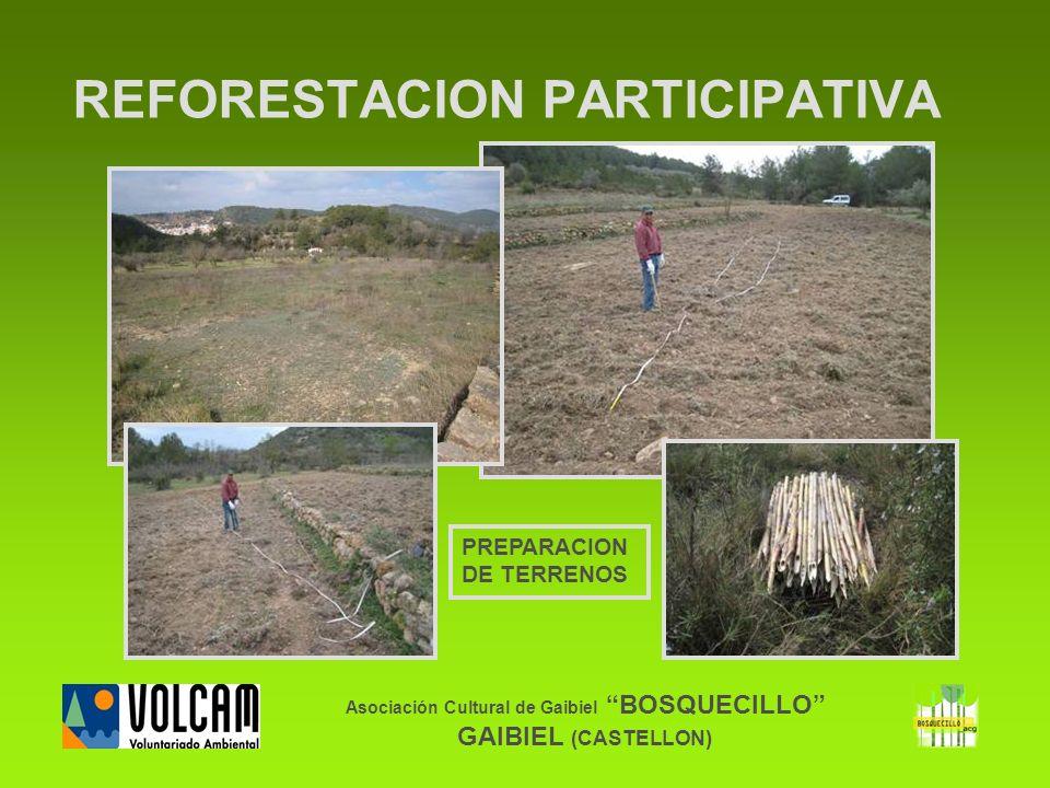 Asociación Cultural de Gaibiel BOSQUECILLO GAIBIEL (CASTELLON) REFORESTACION PARTICIPATIVA PREPARACION DE TERRENOS