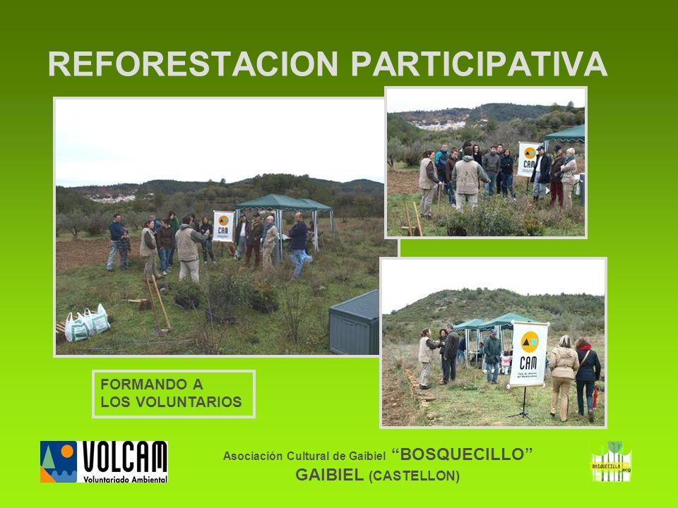 Asociación Cultural de Gaibiel BOSQUECILLO GAIBIEL (CASTELLON) REFORESTACION PARTICIPATIVA FORMANDO A LOS VOLUNTARIOS
